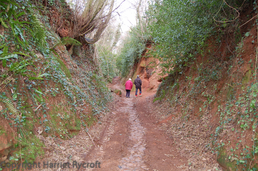 Ancient track in deepest Somerset
