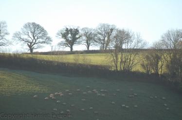 20110109-DSC_0044