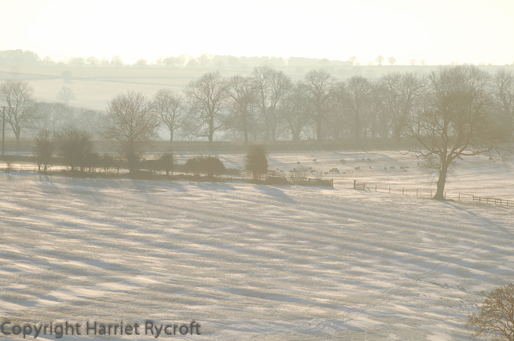Ridge and furrow in the Cotswolds