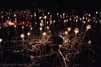 Bruce Munro installation at Waddesdon