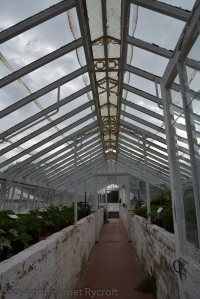 Inside one of the glasshouses. They are used where possible.