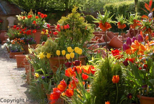 Spring plantings at Whichford Pottery