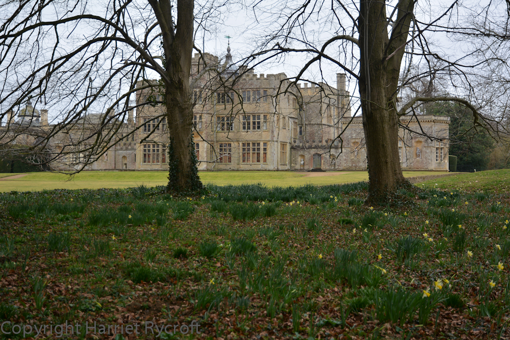 Daffodils sparks beginning at Rousham