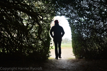 The way through the massive yew hedge