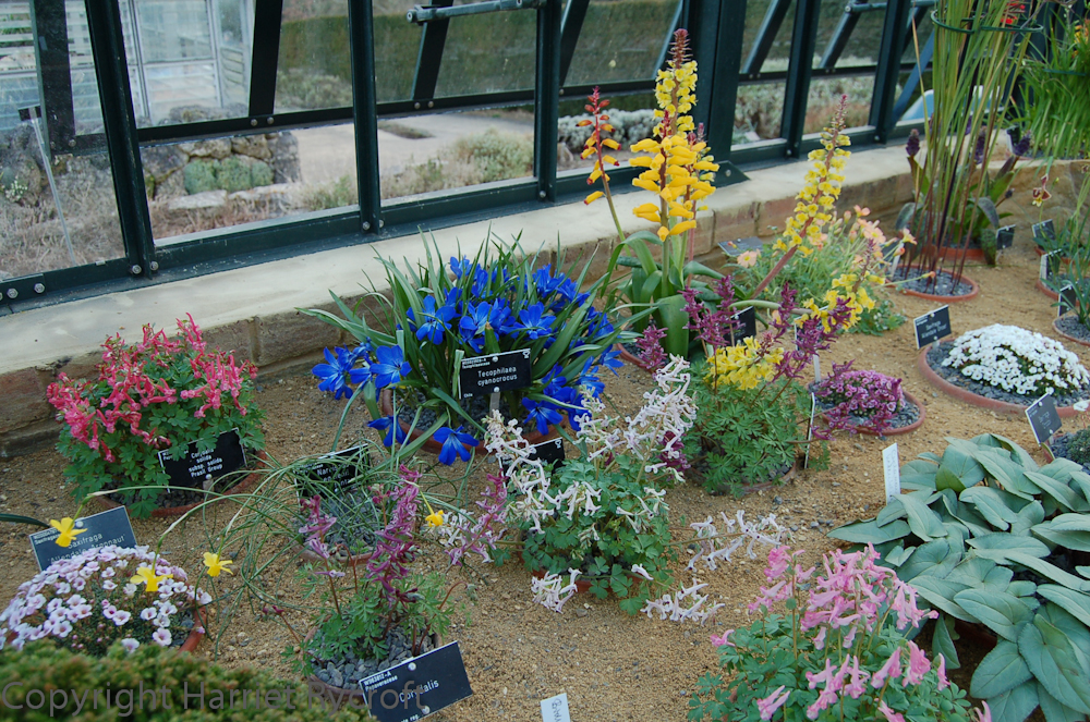 In the alpine house at RHS Wisley