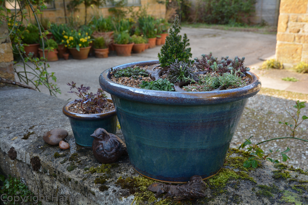 True grit – a spring container planting