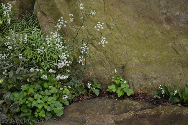 No crevice left unplanted in Dan Pearson's garden.