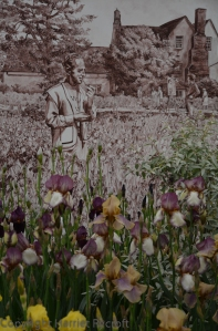 Cedric Morris and his watercolour-toned irises.