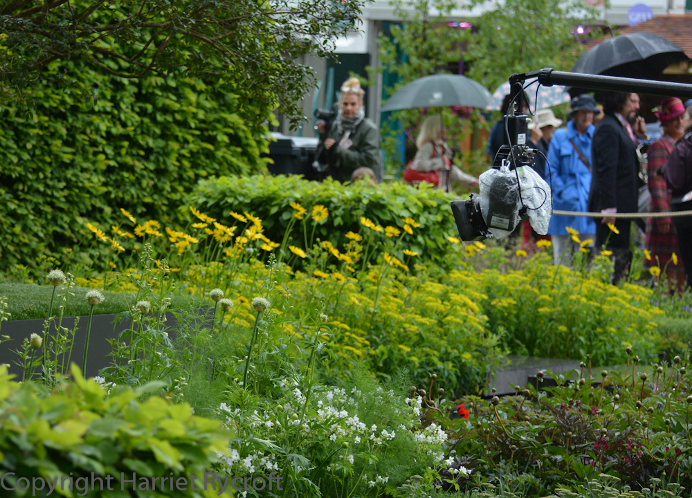 The BBC's boom camera getting the views ticketholders can't of Marcus Barnett's Telegraph Garden. Gold