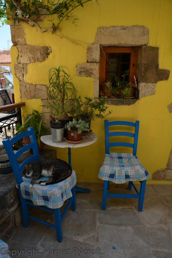 Crete: Cats and Containers