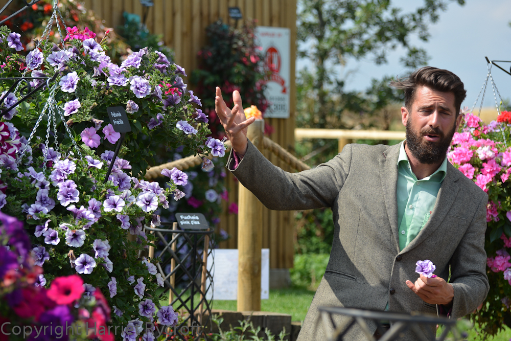 Show and Tell. Michael Perry in full flow about T&M's petunias