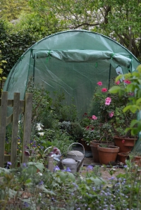 This year I crammed a mini polytunnel between the shed and the greenhouse - very handy for hardening off overwintered tender plants.