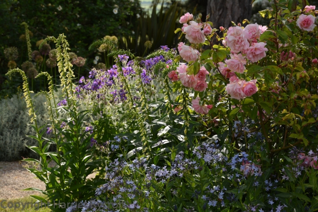 Hidcote and Kiftsgate are not far away from my house and yet I haven't visited the latter very often. There is plenty of gorgeous, romantic planting in this garden - it's in the pipeline for a future blog post...