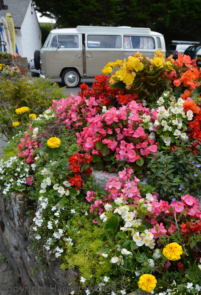 On holiday I usually end up walking a few hundred yards behind my family because I'm taking pictures of plants and planting again... I'll speed up if offered an ice cream though. This is a cheerful bit of roadside planting in Croyde, North Devon.