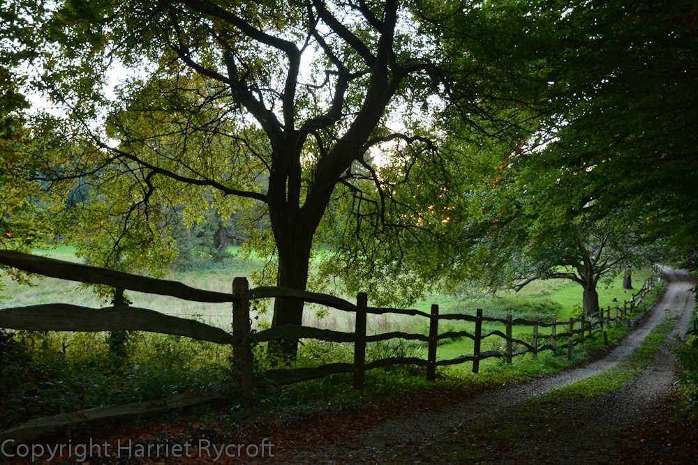On our way to a Sussex B&B one October evening I made Chris stop the car in so that I could run back and take a photo of this intriguing grassy track and its lovely cleft rail fence.