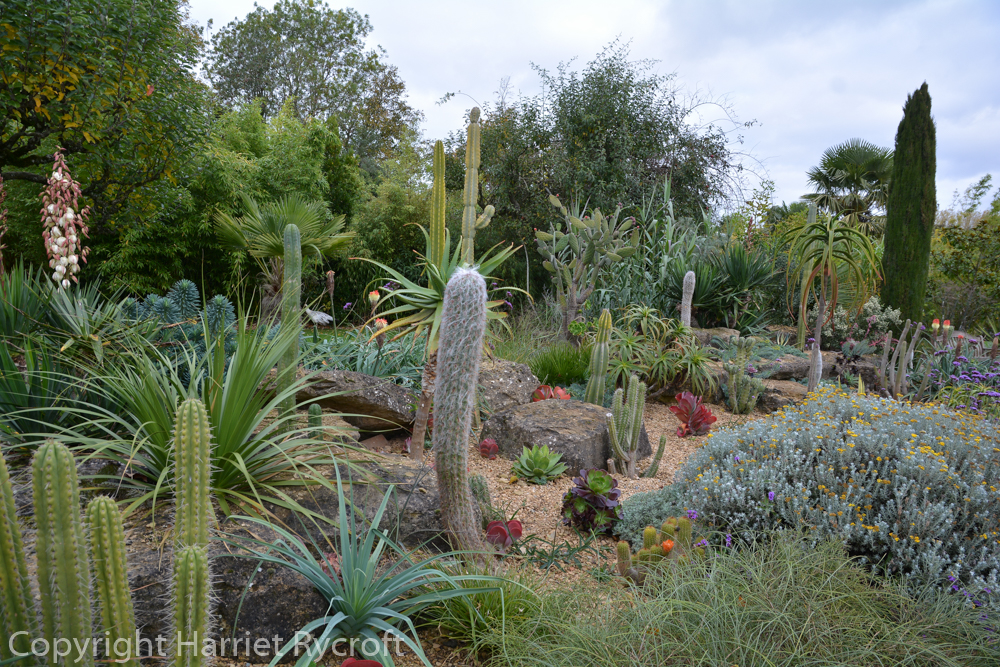 Cacti and succulents bedded out in the walled garden. In the winter they are replaced by conifers.