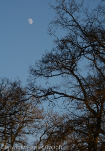 Silvery satellite above Batsford branches