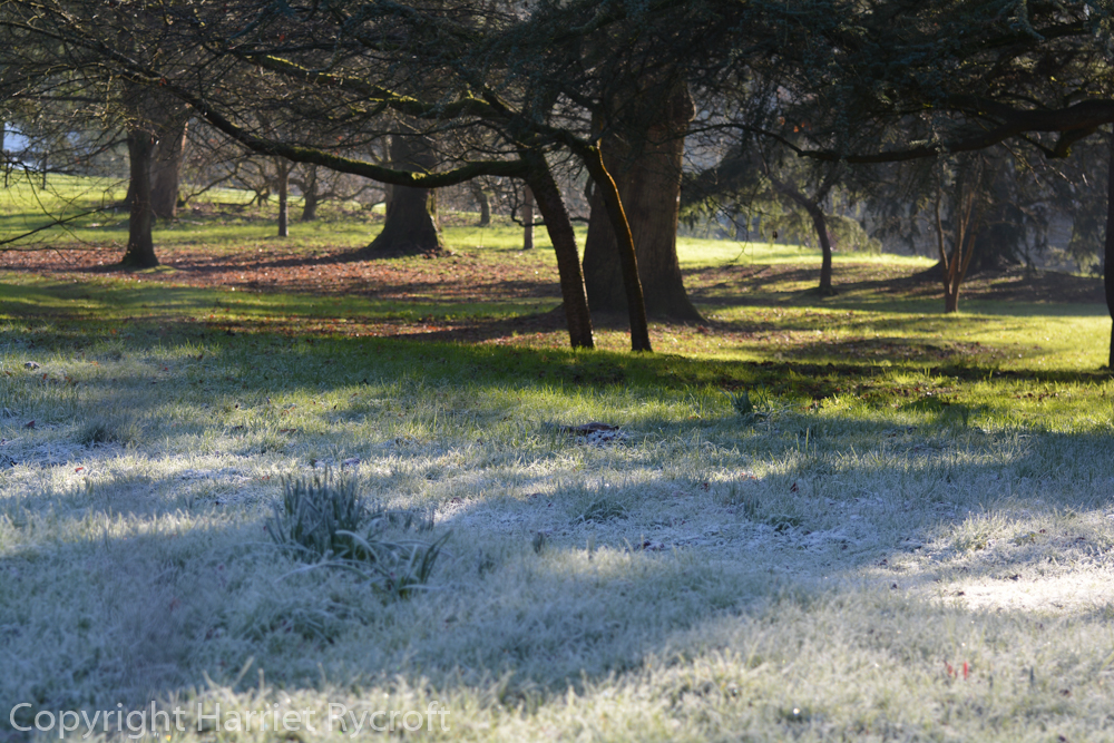 Silver and gold - an unequal battle between sunshine and frost
