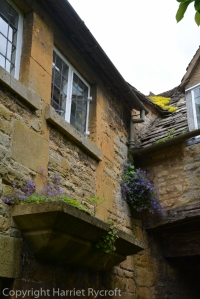 Campanula and sedum taking advantage of the joins between Grevel House and its neighbour