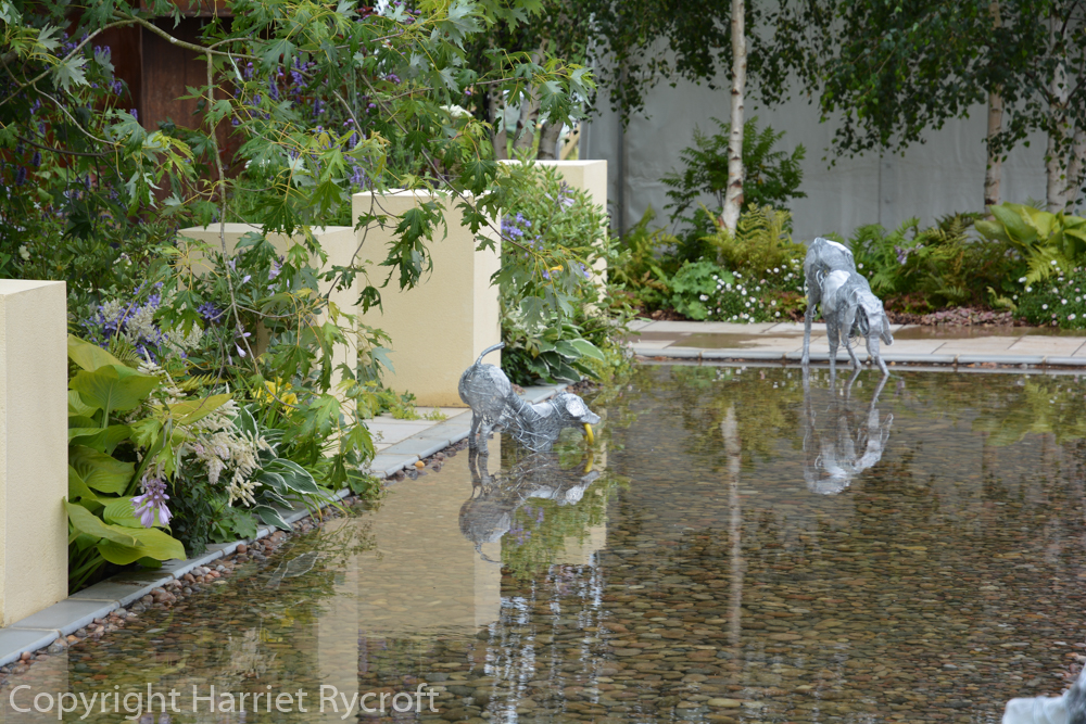Paul Hervey-Brookes's garden for DogsTrust. Paradise for dogs and their humans.