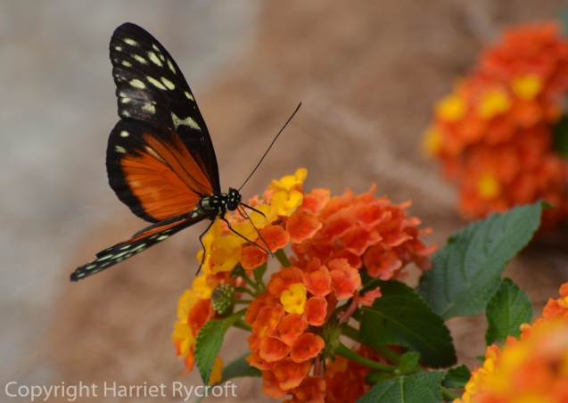 A more joyous kind of brightness in the butterfly dome