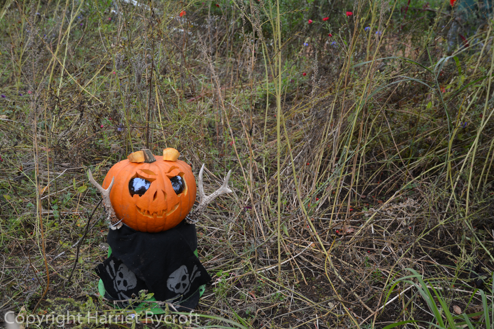 Boo! One of the creations by the garden team at the Cotswold Wildlife Park