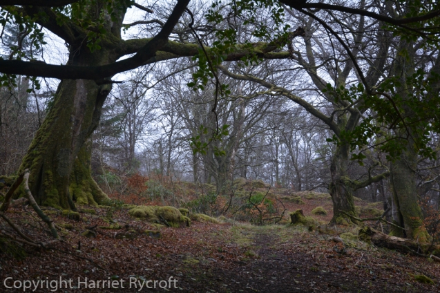 Atmospheric or sinister? Gnarly trees at Larachmor Garden, Scotland
