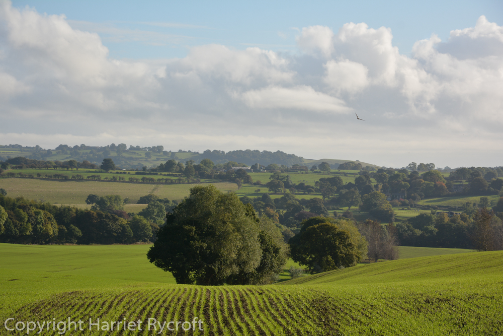 Yorkshire. Curduroy field and fly stitch kite