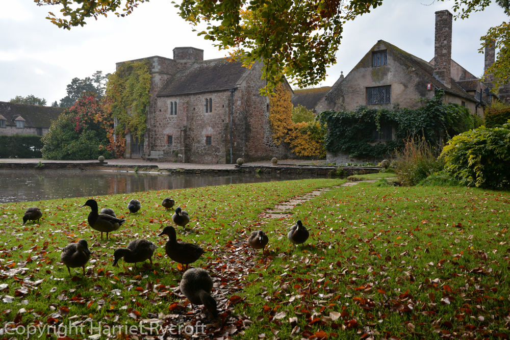 Cothay Manor, Somerset. The ducks thought I was going to feed them.
