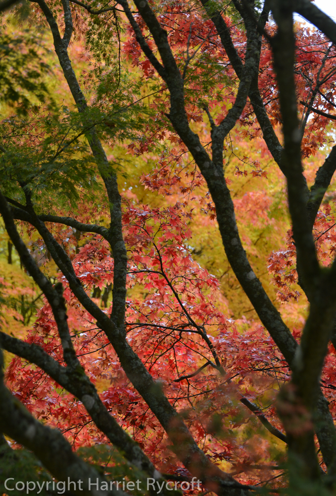 Drizzly but Dazzling –  a Morning at Westonbirt Arboretum