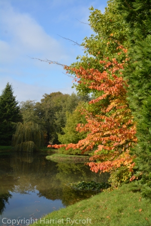 Westonbirt Arboretum - looking out and waving from between the other trees.