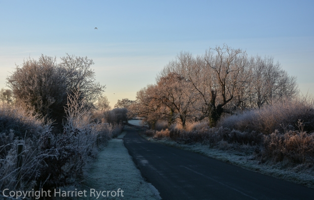 Not far from home. Frost made the familiar roads special.