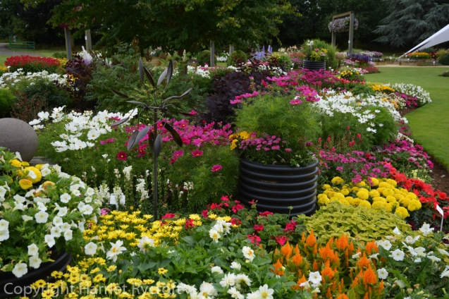 Bright summer bedding plants