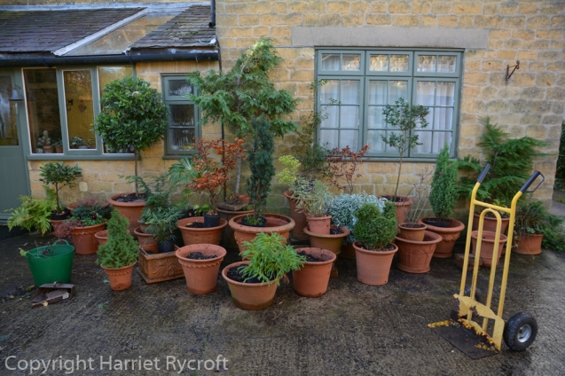 Planting pots for winter