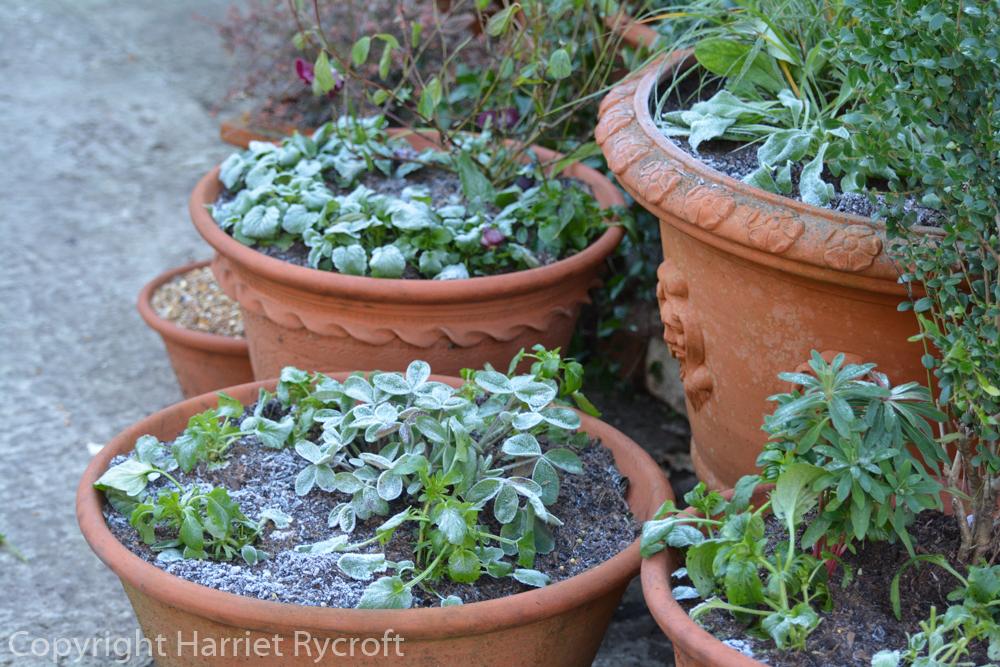 Frost on flowerpots