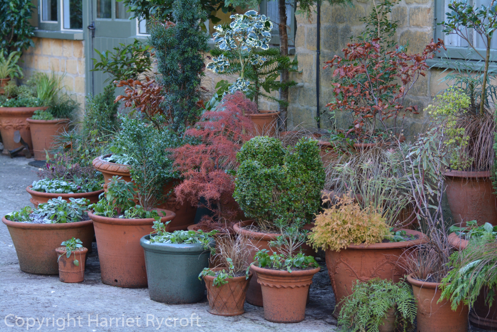 Foliage in winter containers