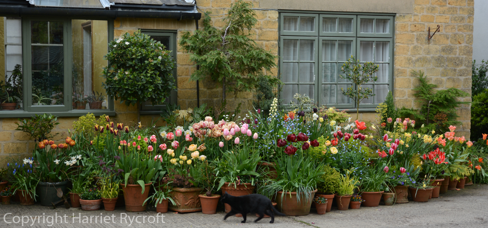 Container garden and cat