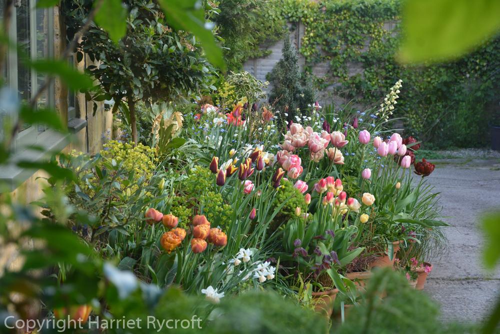 Ten Lessons from my Spring Back Door Pots2016-17