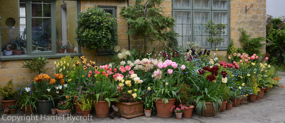 Spring container planting display