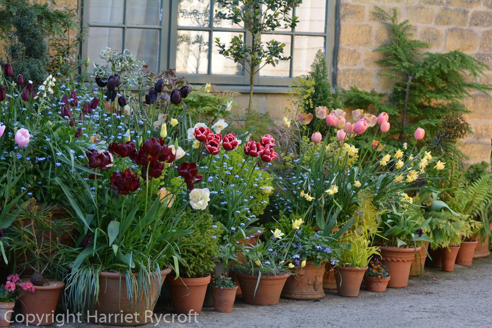 Group of flowerpots