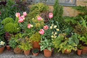 Foliage in spring containers
