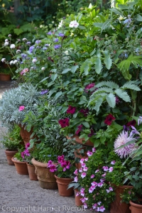 summer,container planting,Harriet Rycroft