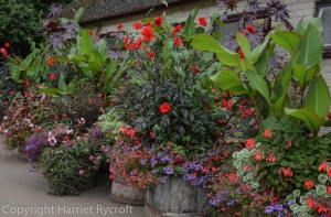 container planting,cotswold wildlife park,summer